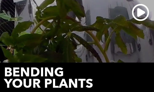 Bending your Plants!