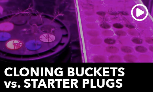Cloning Bucket VS Starter Plugs