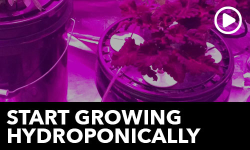 Start Growing Hydroponically