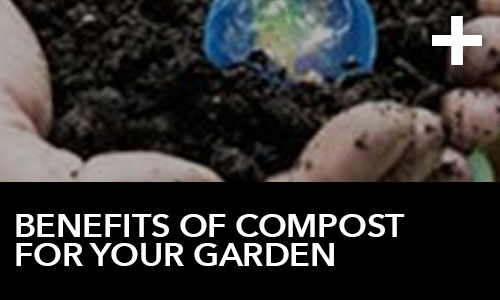 Benefits of Compost for Your Garden