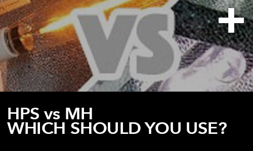 HPS Grow Lights VS MH Grow Lights – Which Should You Use?