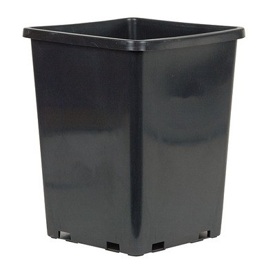 Rose Bucket 7.67 Inch Square Pot