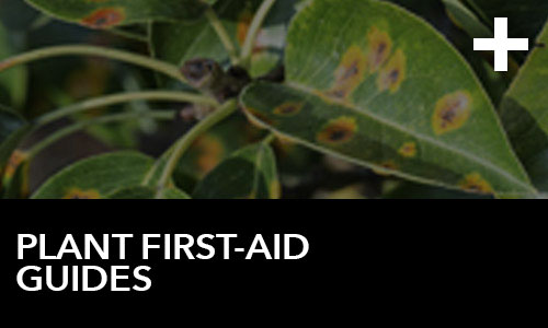 Plant First-Aid Guides