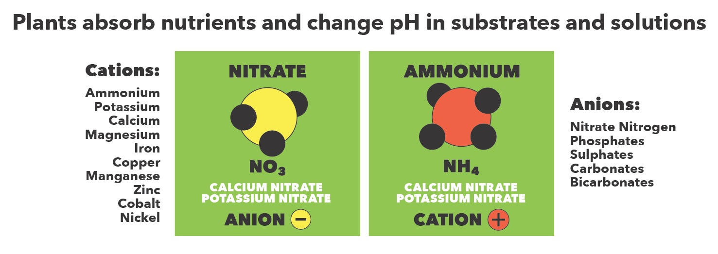 Anion and Cation Nutrients