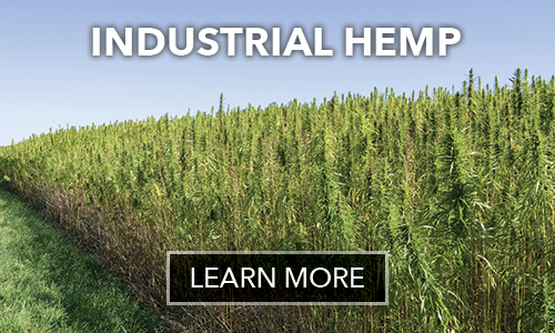 Hemp Growing Best Practices