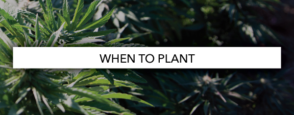 When To Plant