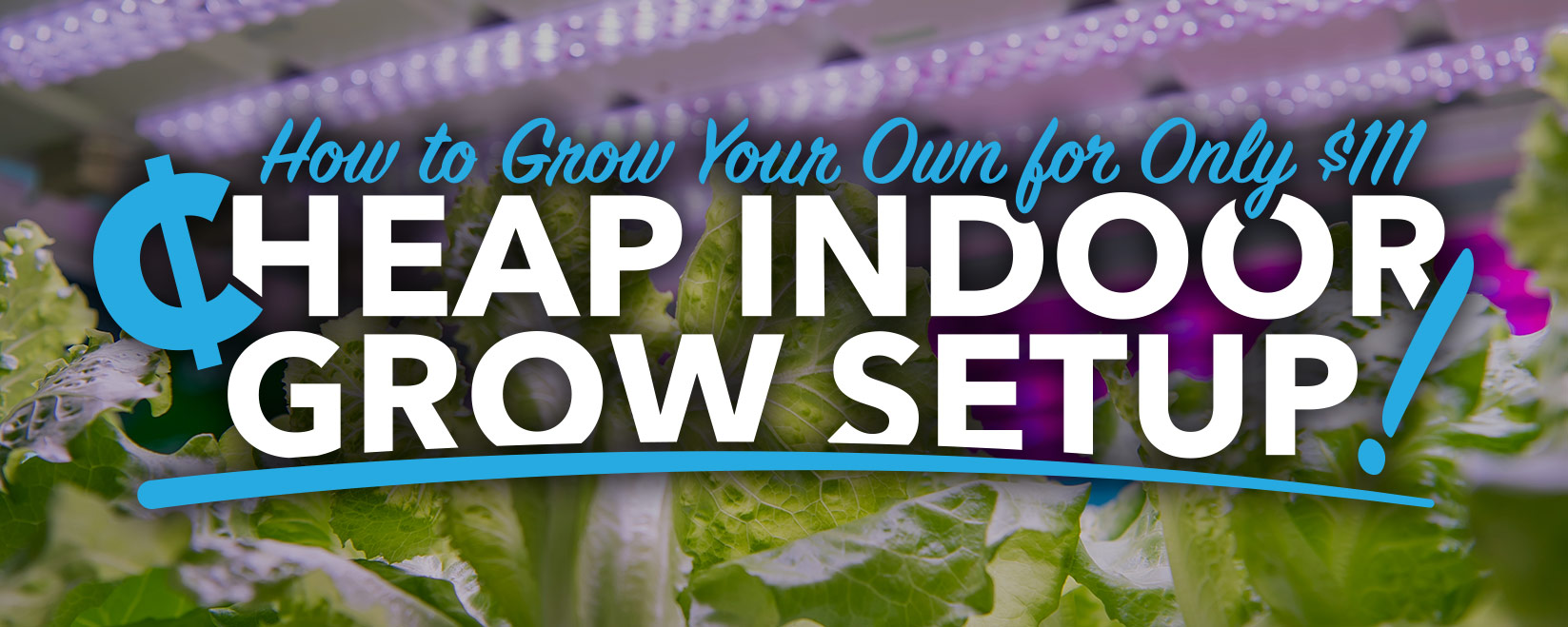Cheap Indoor Grow Setup: How to Grow Your Own for Only $111