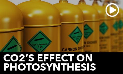 Ask the Doc: Photosynthesis and CO2