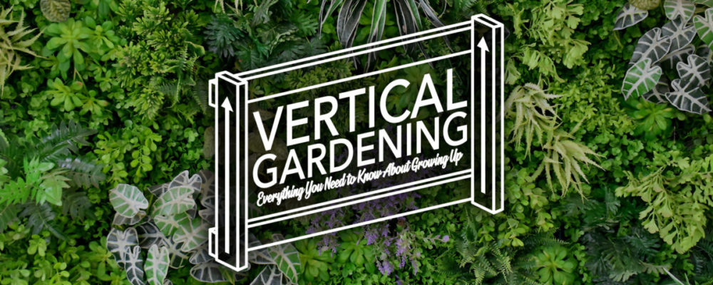 Vertical Gardening – Growing Up in 2020