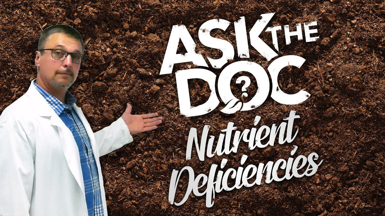 Ask the Doc: Diagnosing Nutrient Deficiencies