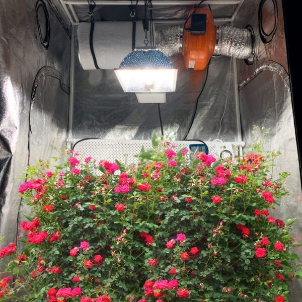 Scion 315w Dimmable CMH Grow Lighting