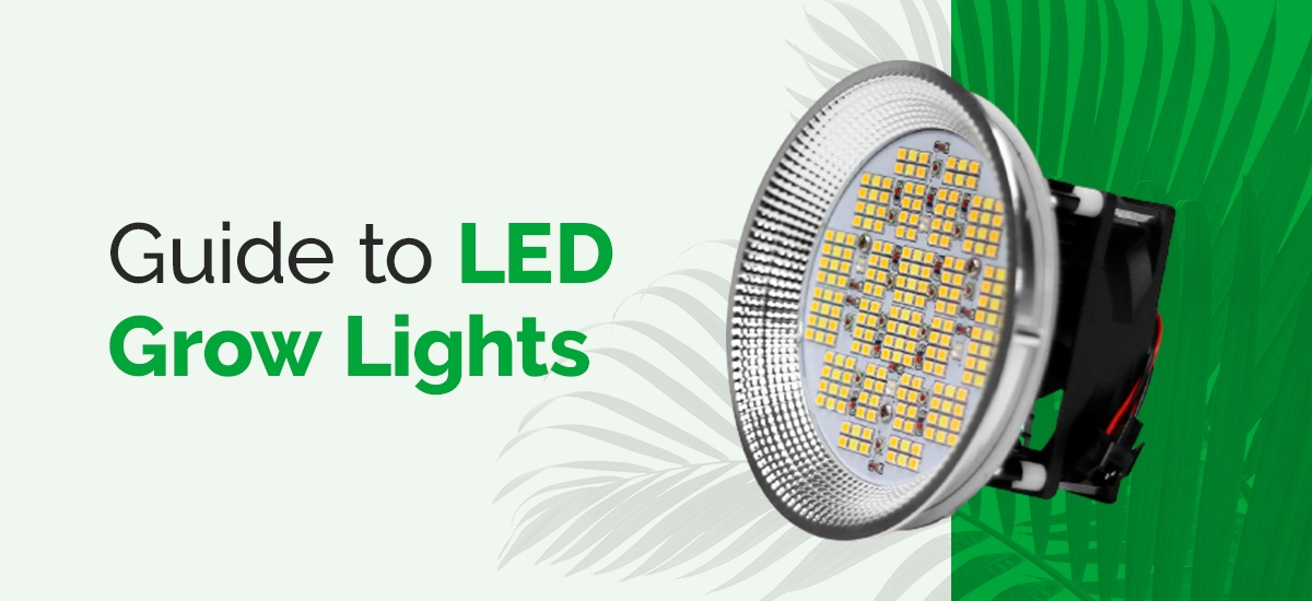 Guide-to-LED-grow-lights