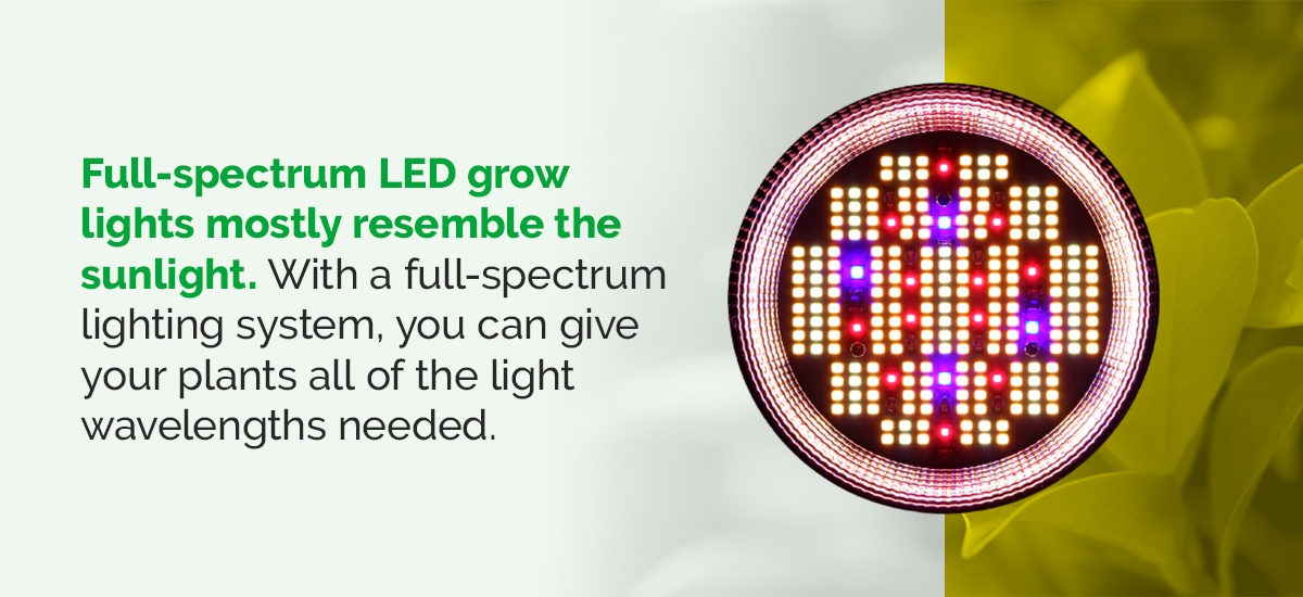 What Are Full-Spectrum LED Grow Lights?