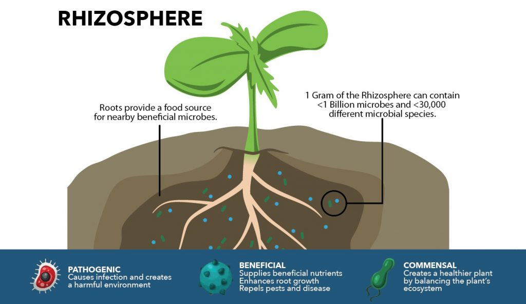 Beneficial Soil Microbiology