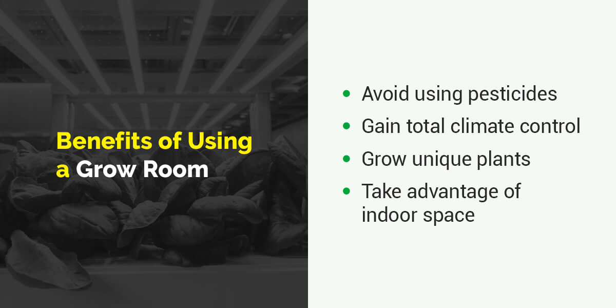 Benefits of Using a Grow Room