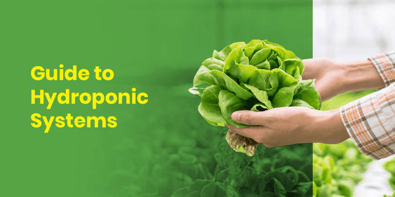 Guide to Hydroponic Systems