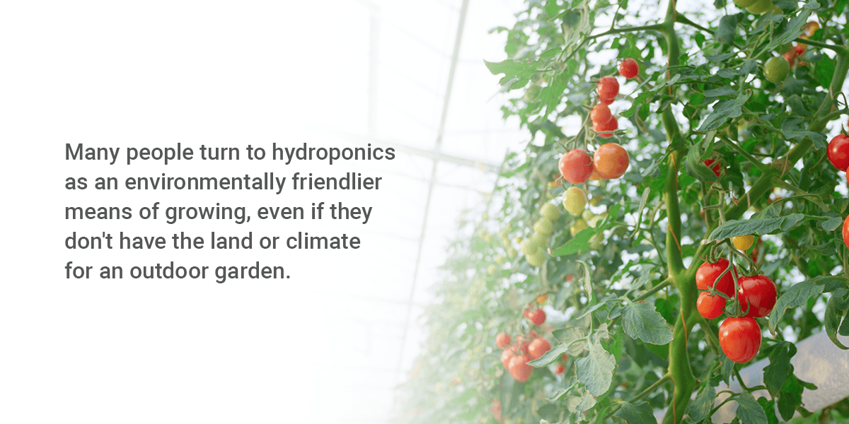 What Is a Hydroponic System?