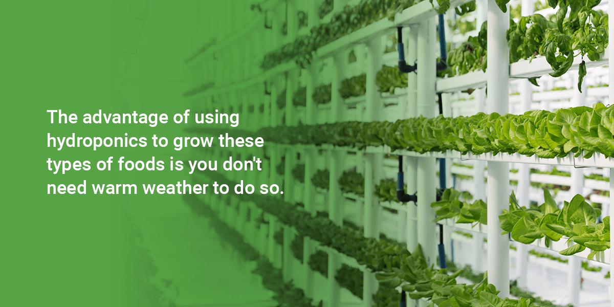 What Can Be Grown in a Hydroponic System?